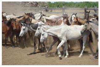 Cavalo lavradeiro