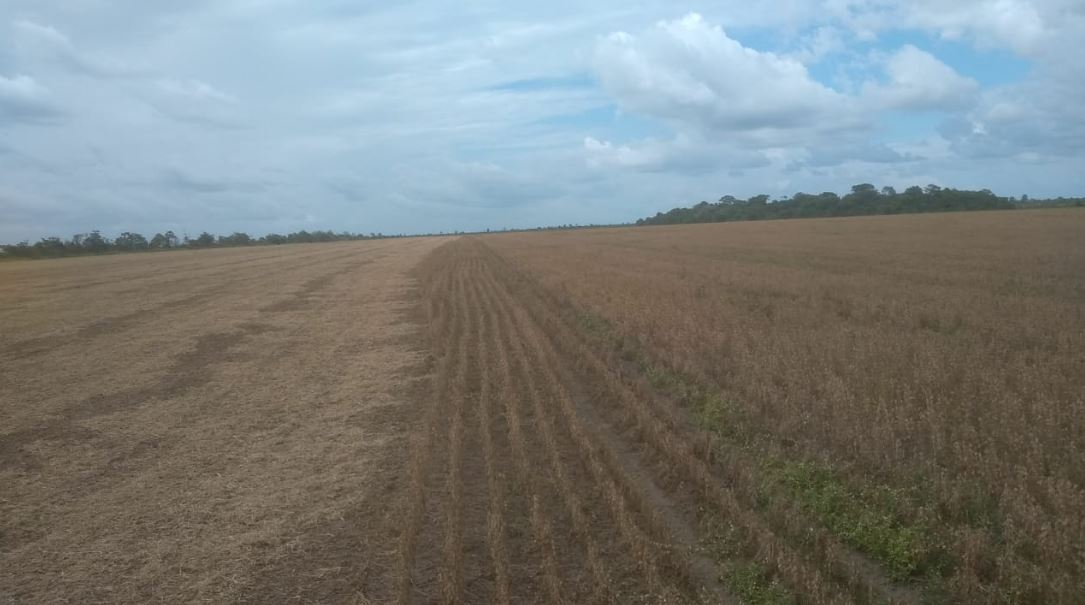 Colheita de soja em Macapá (AP). Envio de Produtor Adriano Santana