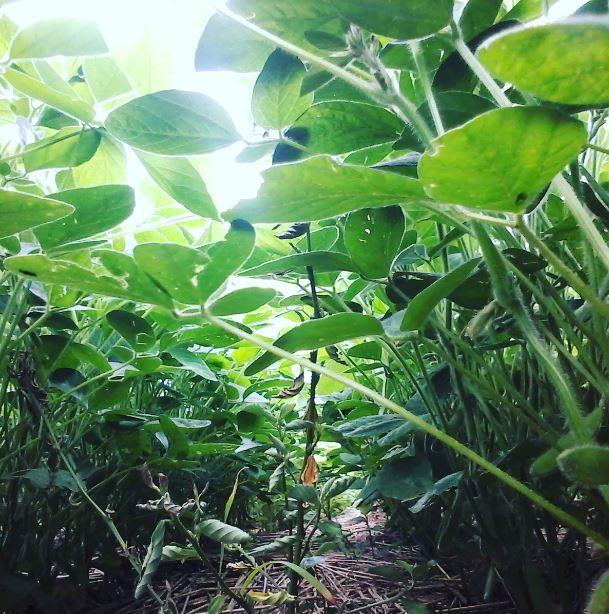 Fazenda Bodryni em Pato Branco (PR). Envio do Técnico Jonatan T. Soares