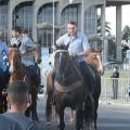 bolsonaro em cavalo
