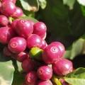 café em são pedro da uniã-mg
