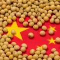 China soja destacão