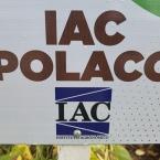 IAC lança nova variedade de feijão Polaco