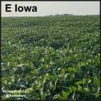 Iowa 4
