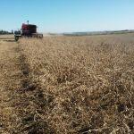 Colheita de soja em Restinga Sêca (RS), da produtoro Adriano Grigoletto