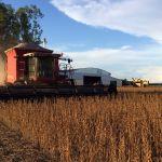 Colheita da soja em Balsas (MA). Envio do produtor rural Elton Rudi Gewehr