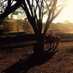 Foto 06 - Fazenda Água Nova em Rancho Alegre (PR). Envio de Helaine Dias Ortiz