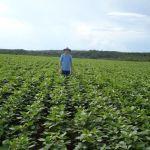Lavoura de soja em Balsas (MA), na Fazenda Angicos, do produtor de Mateus Pasinato