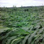 Chuva de vento em Ipameri (GO), envio de Sônia Bonato