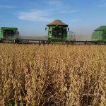 Lavoura de soja em Condor (RS), envio do Engenheiro Agrônomo Givago Borghetti, da Cotrijal
