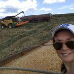 Colheita de milho pipoca em Vacaria (RS), envio de Eva