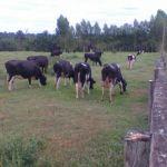 Imagens do Rancho Milani em Cerejeiras (RO), envio de Jéssica Milani
