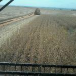 Colheita da soja em Capão do Cipó (RS), do produtor Marcio Ceolin