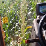 Aplicação de fungicida no milho Iguatu (PR), produtor Nelvis Musskopf. Enviado por Letícia Ferraz