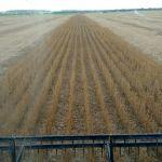 Colheita da soja em Itanhangá (MT), na Fazenda Mangueirinha, de Gustavo Calgaro e família