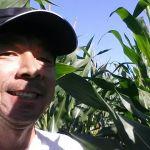 Milho safrinha em Terra Roxa (PR), do produtor Takeo Matsui