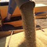 Colheita de soja em Figueirópolis (TO), do proprietário Orlei do Nascimento