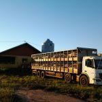 Carregamento de suínos na Granja Fera em Moreira Sales (PR)