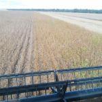 Colheita de soja em Gaúcha do Norte (MT), na Fazenda Amanhecer II, dos produtores João Carlos e Mauro Calgaro