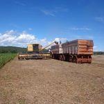 Colheita de soja em Canarana (MT), na Fazenda Vale Verde São Sebastião, propriedade da Família Casotti