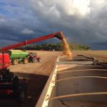 Colheita de soja em Maracaju (MS), do produtor Leonir Cervi