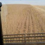 Colheita de soja em Ibiruba (RS), dos produtores Solano Schneider e Ari Schneider, da Granja Julia