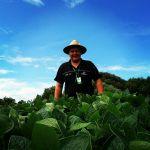 Lavoura de soja em Santa Cecília do Sul (RS), envio do Técnico Agrícola Edimar Cecchin