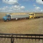 Colheita de Soja em Três de Maio (RS), Foto do Técnico em Agropecuária Fernando Rustick