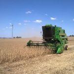 Colheita de soja em Nova Ramada (RS), envio de Carlos Tamiozzo