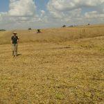 Colheita de soja em Santa Rosa (RS), na propriedade de Silmar Rambo. Foto da Engenheira Agrônoma Fabiane Rambo