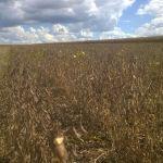 Colheita de soja em Uberaba (MG), na Fazenda Teimosa, do produtor Ezio Seabra
