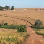Colheita de soja em Sertanópolis (PR), da família Favoreto