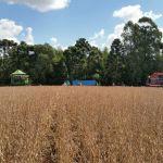 Colheita de soja em Muitos Capões (RS), dos irmãos Baseggio