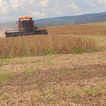 Colheita da soja na Fazenda Brejão, em Riachão (MA). Foto dos produtores rurais Telvino e Marciano Debastiani