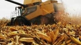 Imea reduz estimativa de produção do milho em MT para 9,96% a menos do que a safra passada
