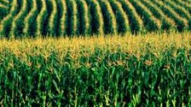 CNA debate conjuntura do setor de milho no Brasil