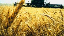 Argentina anuncia área recorde semeada neste inverno 21/22