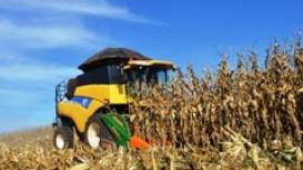Colheita do milho passa dos 72% no MT enquanto IMEA reduz produtividade e eleva mais uma vez custos de produção