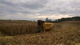 Colheita do milho vai à 10% no Paraná enquanto qualidade de lavouras cai mais uma vez, aponta Deral