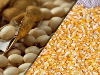destacao - soja e milho - USDA