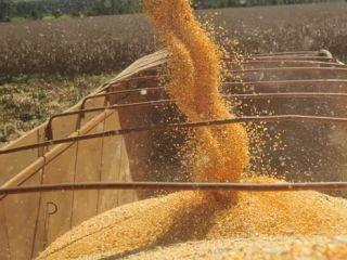 Destacao - Colheita de milho