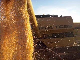 Imagem do dia - Colheita de milho safrinha em Uraí (PR), enviado por Fernando Gusmão