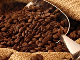 cafe arabica - saca - graos torrados 16:9