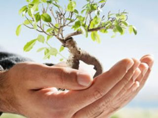Meio Ambiente - Destaque 2 - 377x370