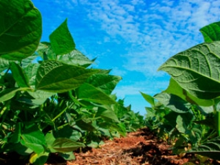 Plantio de soja destaque video