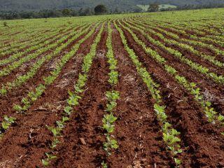 Imagem do dia - Lavoura de soja em Goianesia (GO), do produtor Rogério Sousa