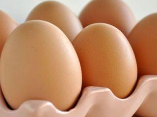 Ovos - Destaque 2 - 377x370