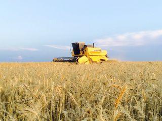 Imagem do dia - Início da colheita de trigo em Boa Vista do Incra (RS). Envio do Engenheiro Agrônomo Maurício Kunz