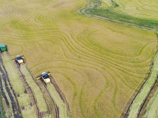 Colheita de arroz no RS - 16x9 16:9