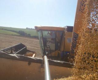 Início da colheita da soja em Ouro Verde do Oeste (PR), da Família Pastore Ouro. Envio do Engenheiro Agrônomo Rodrigo Fermino